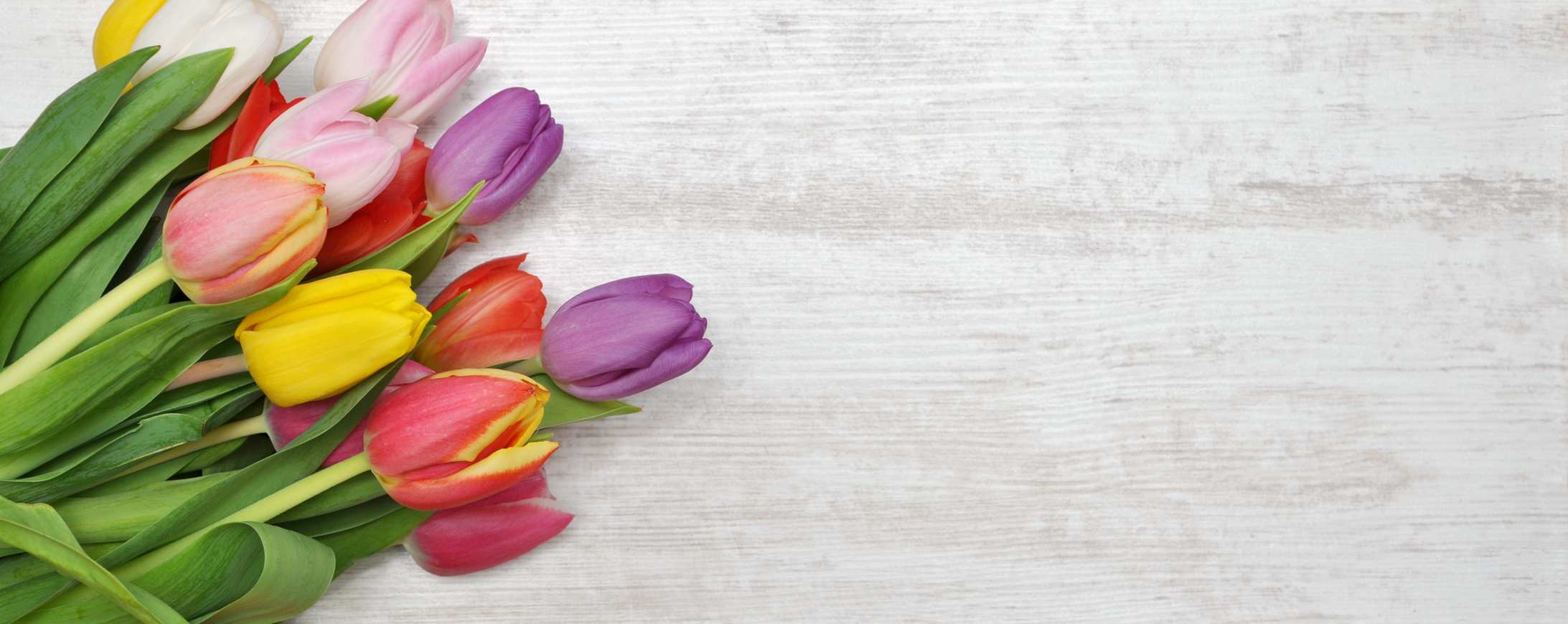 Hintergrund Tulpen